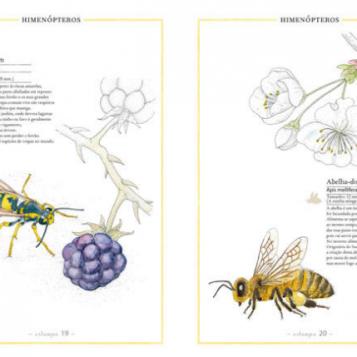 inventario-ilustrado-insectos-int-kalandraka-loscuentosdebastian